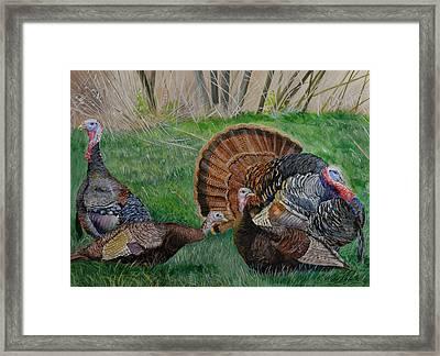 Spring Tom - Turkeys Framed Print by Alvin Hepler