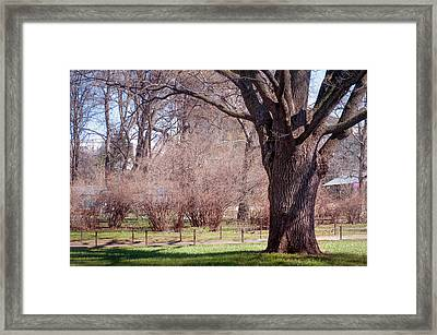 Spring Tree At Soft Rosy Spring In The Garden Framed Print by Jenny Rainbow