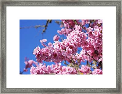 Spring Tree Blossoms Pink Flowering Trees Framed Print by Baslee Troutman