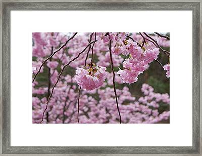Spring Tree Flower Blossoms Art Framed Print by Baslee Troutman