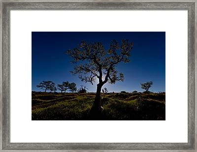 Spring Tree Framed Print by Robert Woodward