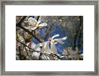 Spring Trees 1 Framed Print