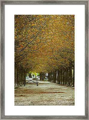 Framed Print featuring the photograph Spring Trees Blossoming In Montreal by Sandra Cunningham