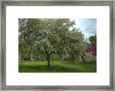 Spring Trees Framed Print by Honour Hall