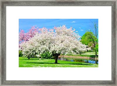 Spring Trees Framed Print by Kathleen Struckle