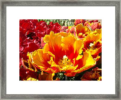 Spring Tulip Flowers Art Prints Yellow Red Tulip Framed Print by Baslee Troutman