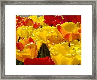 Spring Tulips Art Prints Yellow Red Tulip Flowers Framed Print