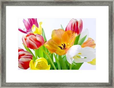 Bright White Red Orange Yellow Pink Tulips Flowers Art Work Photography Framed Print by Artecco Fine Art Photography