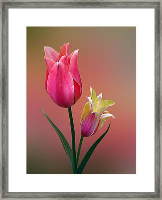 Framed Print featuring the photograph Spring Tulips by Judy  Johnson