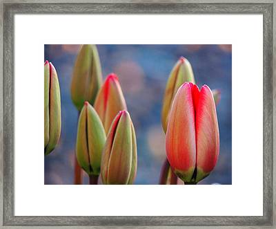 Framed Print featuring the photograph Spring Tulips by Karen Horn