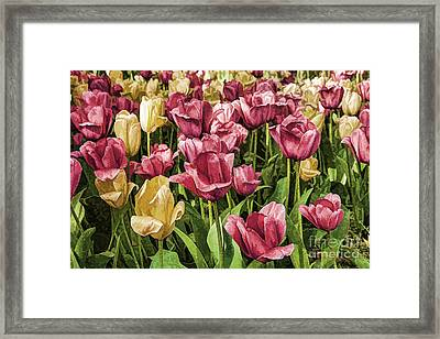 Framed Print featuring the photograph Spring Tulips by Linda Blair