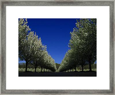 Spring Tunnel Framed Print by Raymond Salani III
