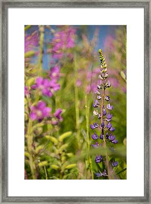 Spring Up Framed Print by Aaron Bedell