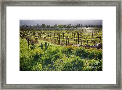 Spring Vine And Poppies In Napa Valley Framed Print