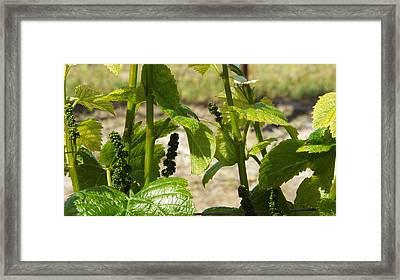 Spring Vine Framed Print