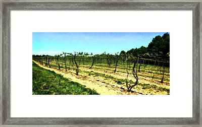 Spring Vineyard Ll Framed Print by Michelle Calkins