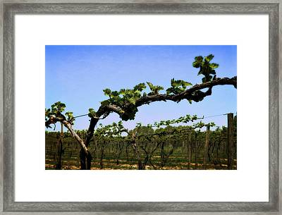 Spring Vineyard Framed Print by Michelle Calkins
