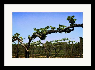 Grapevine Leaf Digital Art Framed Prints