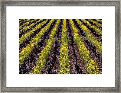 Spring Vinyards Framed Print by Garry Gay