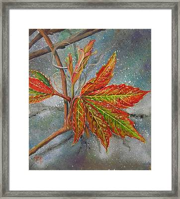 Spring Virginia Creeper Framed Print