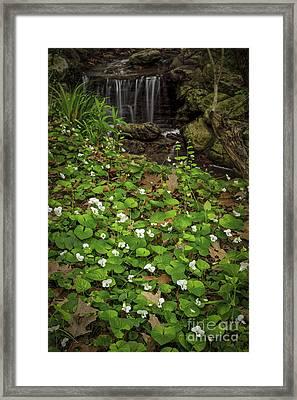 Spring Voilets Near Creek Framed Print by Elena Elisseeva