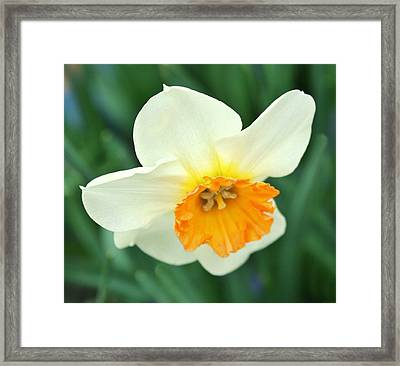 Spring White Framed Print by Cathie Tyler