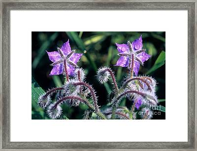 Framed Print featuring the photograph Spring Wild Flowers by George Atsametakis