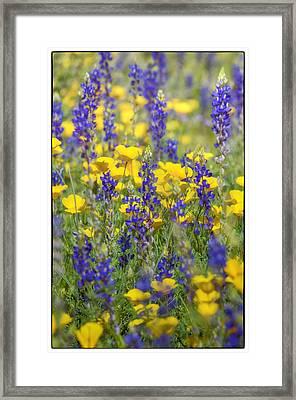 Spring Wildflower Bouquet  Framed Print by Saija  Lehtonen