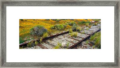 Spring Wildflowers And Railroad Tracks Framed Print by Panoramic Images