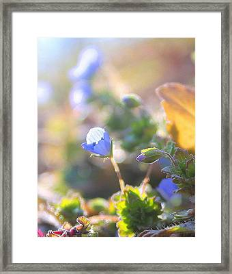 Framed Print featuring the photograph Spring Wildflowers by Candice Trimble