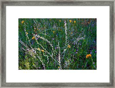 Spring Wildflowers In Park Sierra-ca Framed Print by Ruth Hager