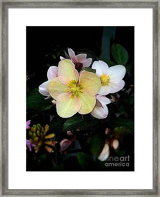 Spring Will Come Framed Print by Michaela Sibi