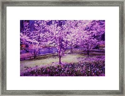 Spring Wonderland Pastel. Garden Keukenhof. Netherlands Framed Print by Jenny Rainbow