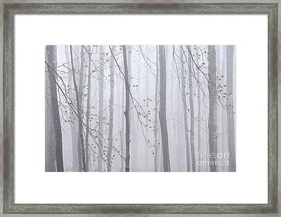Framed Print featuring the photograph Spring Woodland Fog 1 by Alan L Graham