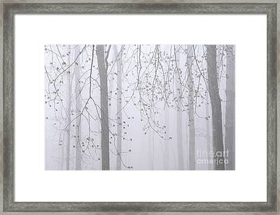 Framed Print featuring the photograph Spring Woodland Fog 2 by Alan L Graham
