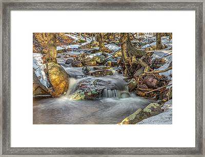 Spring Woods Framed Print by Sara Hudock