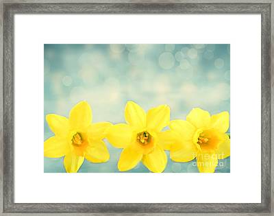 Spring Yellow Framed Print by Darren Fisher