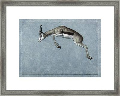Springbok Framed Print by James W Johnson