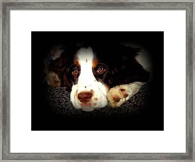 Springer Framed Print by Dancingfire Brenda Morrell