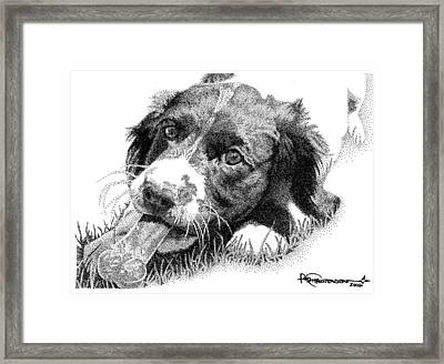 Springer Puppy Framed Print by Rob Christensen
