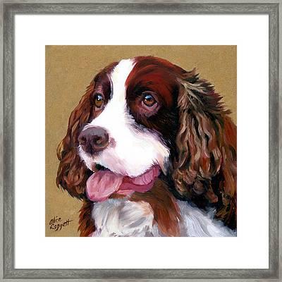 Springer Spaniel Dog Framed Print by Alice Leggett