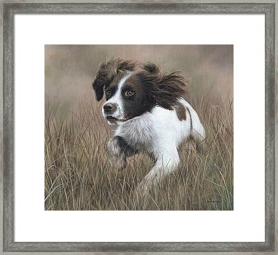 Springer Spaniel Painting Framed Print