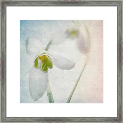 Springflower Framed Print by Annie Snel