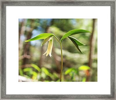 Spring's Arrival Framed Print by Joy Nichols