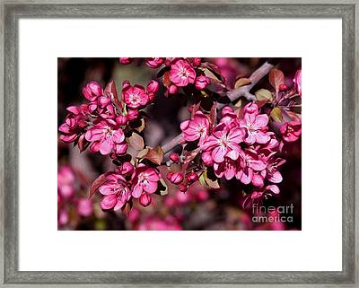 Framed Print featuring the photograph Spring's Arrival by Roselynne Broussard