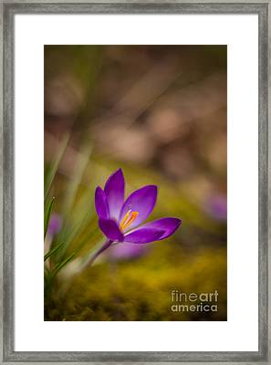 Springs Color Solitary Framed Print by Mike Reid
