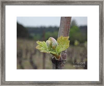 Spring In The Vineyard Framed Print by France  Art