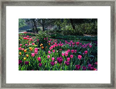 The Promise Of Spring Framed Print by Lynn Bauer