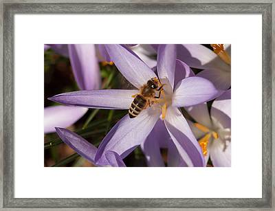 Spring's Welcome Framed Print