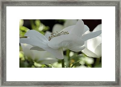 Springtime ... Swingtime Framed Print by Connie Handscomb
